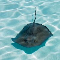 Подводное плавание на Карибах - Grand Cayman