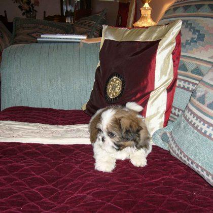 Особенности поиска квартиры, если есть домашние животные